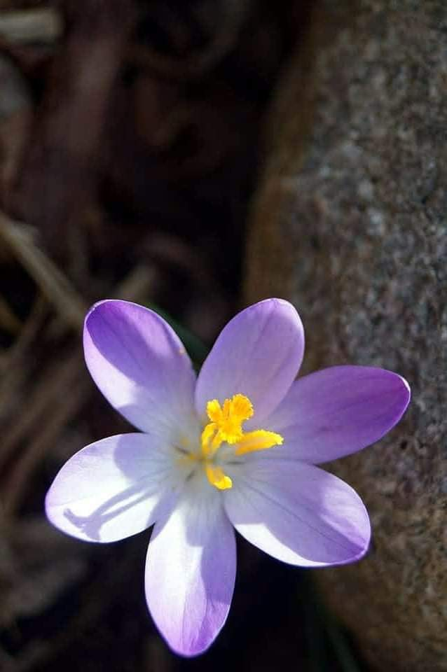 – tavaszi –
