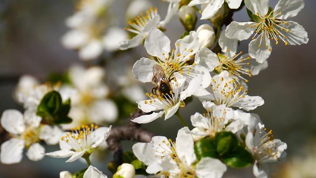 Új tavasz üzen
