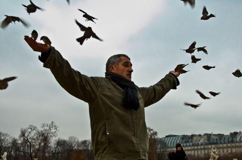 A férfi és a madarak